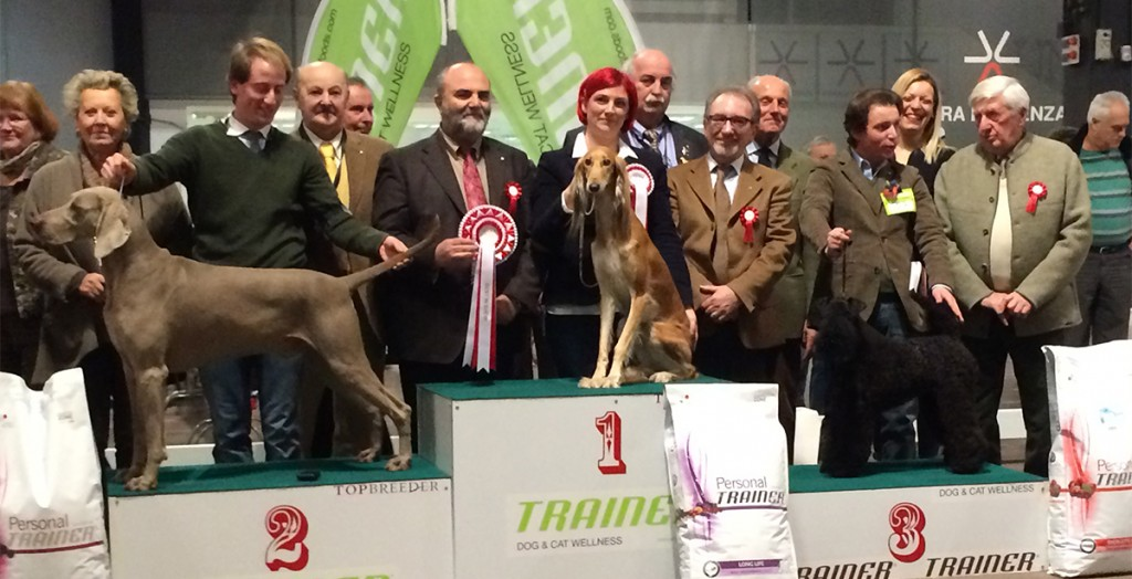 14.2.2015 CAC              VICENZA     BEST IN SHOW